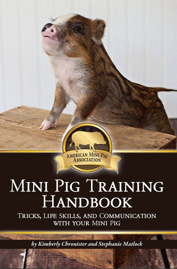 Potty Trainings Tips - American Mini Pig Association