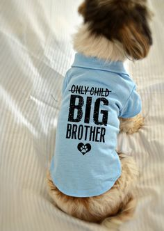 Small Dog Polo Shirt. Only Child Big Brother Polo by RedemptionDog