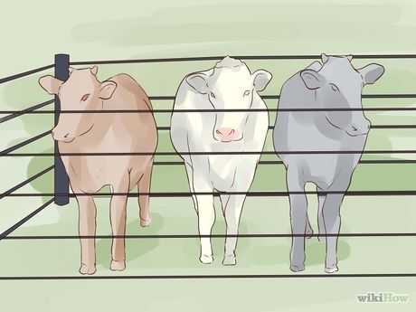 Start up a Beef Cow Calf Operation Step 10 Version 2.jpg