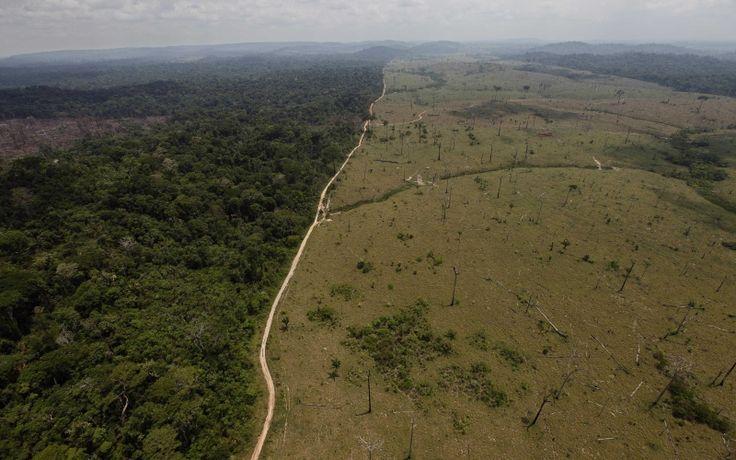 Manejo de bosques por comunidades ayudaría a frenar deforestación global