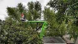 Precision Tree Service Baton Rouge #precision #tree #services http://netherlands.remmont.com/precision-tree-service-baton-rouge-precision-tree-services/  # Welcome to Precision Tree Service Baton Rouge We have over 36 years experience working with trees, and we are happy to provide tree service to the homeowners and business owners of Baton Rouge. Your tree care should only be caredfor by the best professionals in the business!Call us to today: 225-753-6386 or 225-658-0160 The trees around…