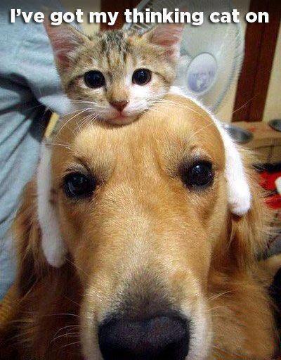 I've got my thinking cat on.