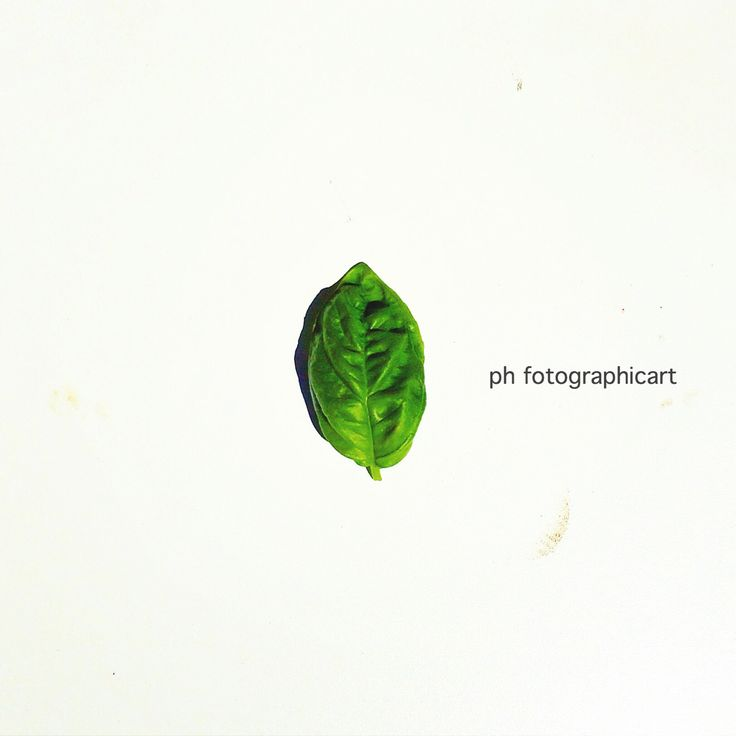 Basil by Fotographicart design