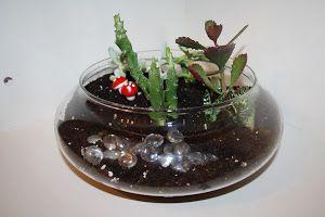 Terrario de cactus.  bonito terrario de cactus, además de los cuidados esenciales para mantenerlo en perfectas condiciones. ¡No te lo pierdas!