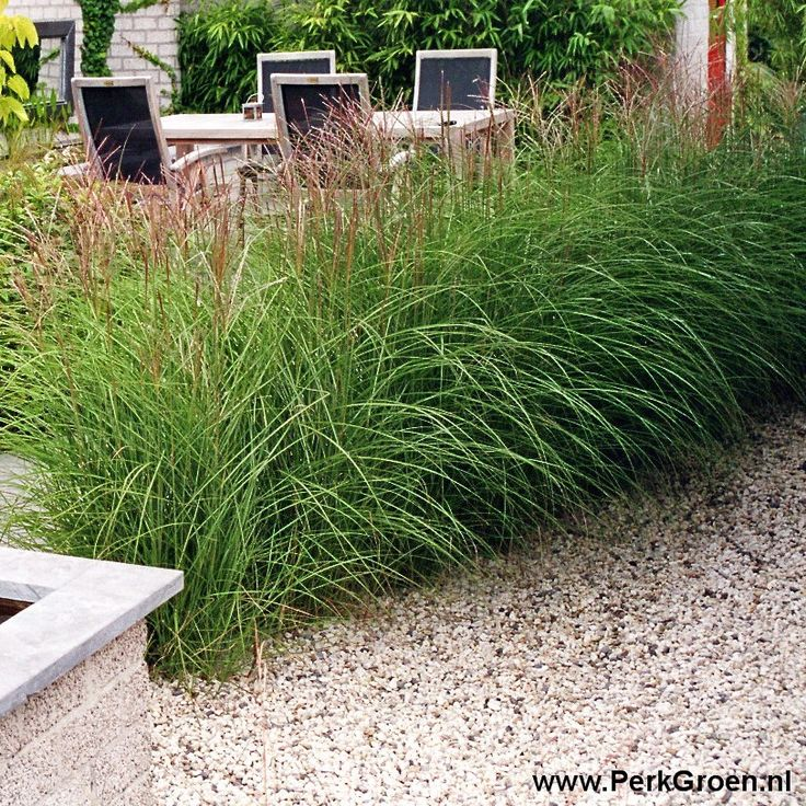 Miscanthus Ferner Osten for around house, bulbs in the spring, flower heads on grass last through winter