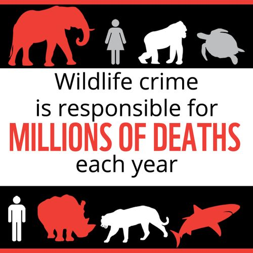 Illegal wildlife trade is responsible for millions of deaths each year