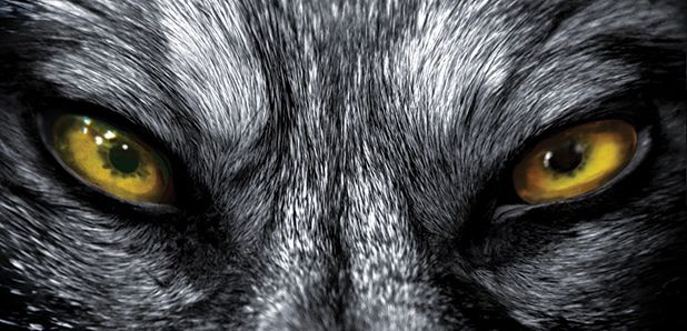 wolf pictures | ... Clark Plan B: Professor Alison Wolf – a wolf in wolf's clothing