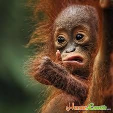 Afbeeldingsresultaat voor funny animals