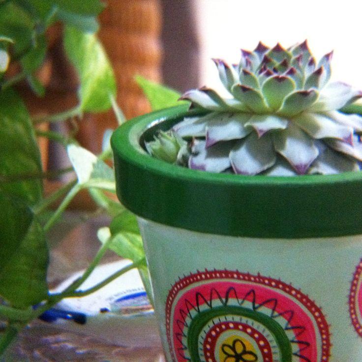 Macetas de barro pintada a mano con cactus y suculentas exclusivas de MACETAS GDAY