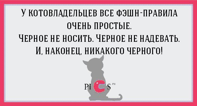 Шутки о котах, кошках и их владельцах.