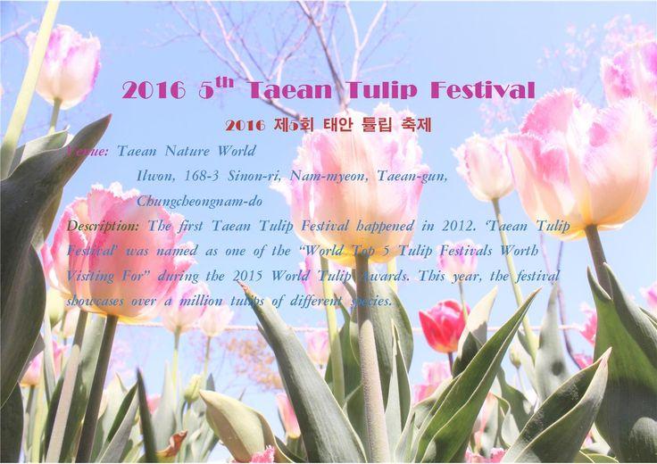 2016 5th Taean Tulip Festival001