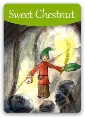 Bach Flower Cards [Sweet Chestnut] - A person in the negative Sweet Chestnut state feels completely alone, helpless, hopeless, and unprotected. This person fears breaking down under the stress and works hard to keep his anguish from other people. After treatment, person will recognize that a new inner journey has started and he will welcome the ability to believe again. He may also experience a new personal relationship with the Divine Spirit.