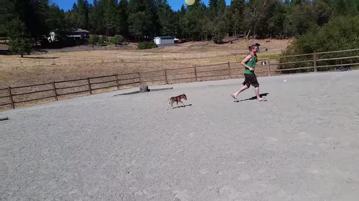 Tiny Horse Is Only 3 Days Old, But Already Loves To Chase His Human!