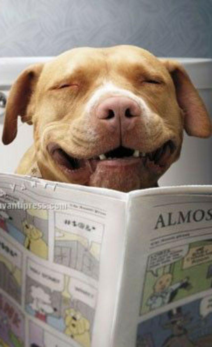 1033 best animal humour images on pinterest | animal humour