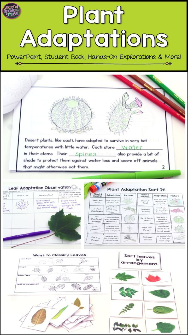hight resolution of Looking for new ideas for teaching science or ways to explore plants with  your kids? This plant adaptation …   Plant adaptations