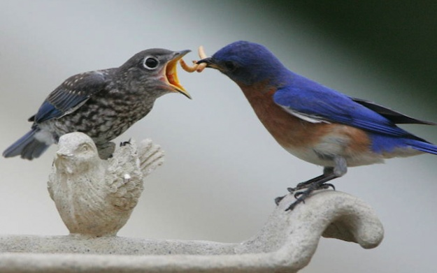 n+1: Please RT A good companion piece to Andrew Sullivan's Why I Blog: Twitter Changing, 2012 Shorts, Literary Magazines, Fave Twitter, Birds Perch, Shorts Articles, Twitter Doesn T, Beautiful Bluebirds, Bluebirds Feeding