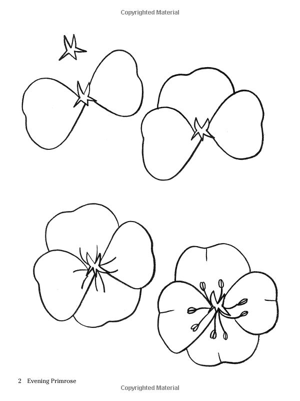How to Draw Flowers (Dover How to Draw): Barbara Soloff Levy: 9780486413372: Amazon.com: Books