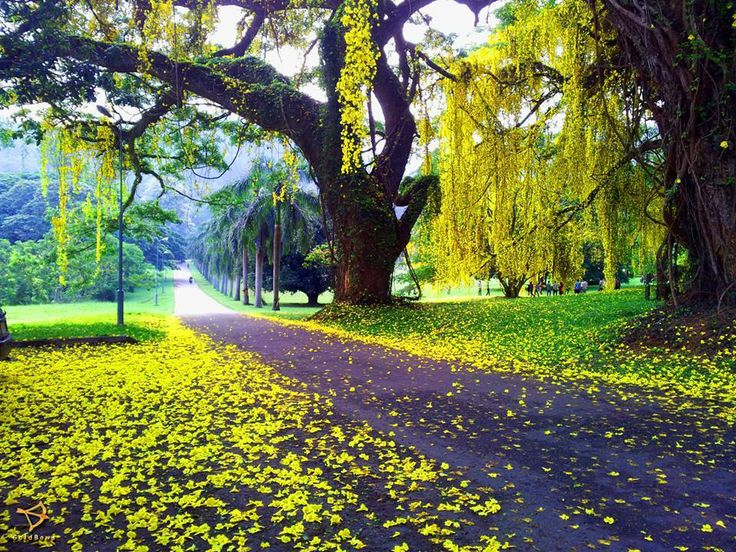 17 Best images about University of Peradeniya,Srilanka. on ...