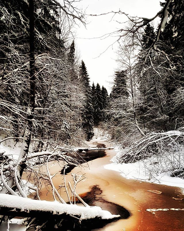 Winter wonderland   #europe #instafinland #järvenpää #travel #traveler #traveling #travelgram #finnishboy #landscape #landscape_lovers #finnish #travelphotography #instatravel #instapic #instagramers #visitfinland #thisisfinland #discoverfinland #nature #hiking #igersofficial #lemmenlaakso #finnishmoments #lovelyfinland #thebestoffinland #nature #instarunners #trailrunning #beautyofsuomi #fitness