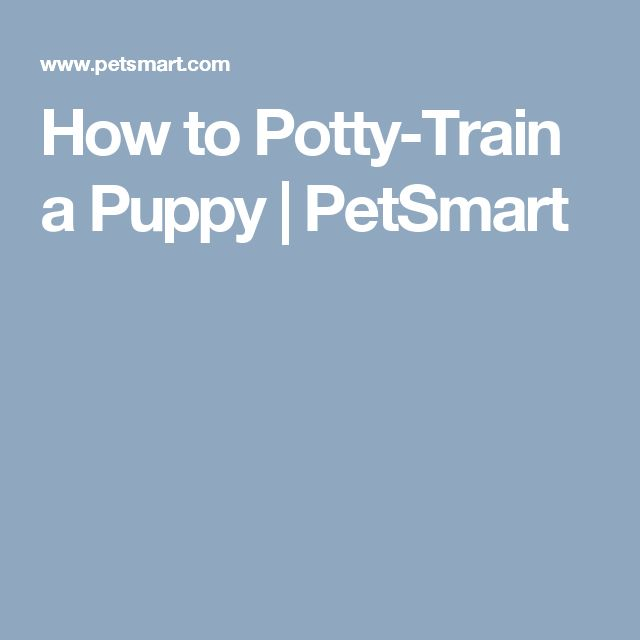 How to Potty-Train a Puppy | PetSmart