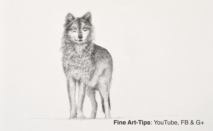 How to Draw a Wolf With Pencil - Narrated, the easy way #art #drawing #FineArtTips #wolf #artistleonardo #Patreon #LeonardoPereznieto #animals #Tutto3 Take a look to my book here: http://www.artistleonardo.com/#!ebooks-english/cswd