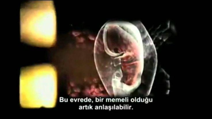 Vahdeti Vücud/ Nondual - Consciousness/ Advaita Vedanta (KYMATICA belges...