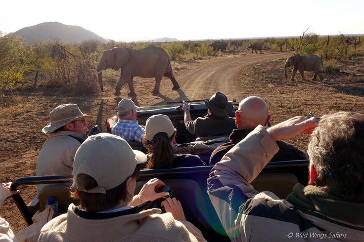 Elephants crossing on a game drive with Tuningi Safari Lodge, Madikwe