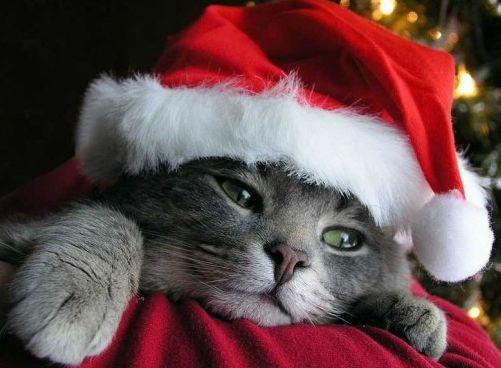 http://www.vivirbienesunplacer.com/todos/la-navidad-es-siempre-sinonimo-de-alegria-y-felicidad/