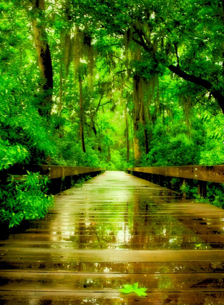 1000 Images About Low Country Scenes On Pinterest South
