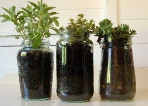 Great idea for herbs.