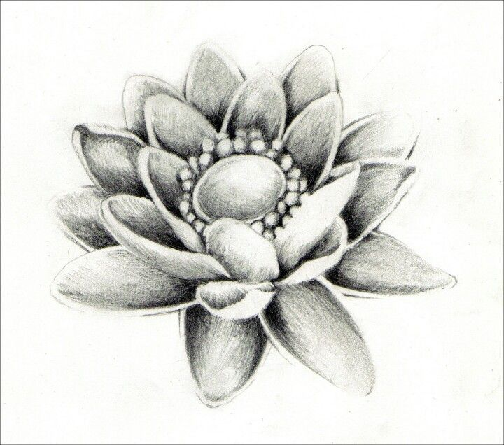 Lotus Flowers Drawings 32 best Lotus Tattoo I...