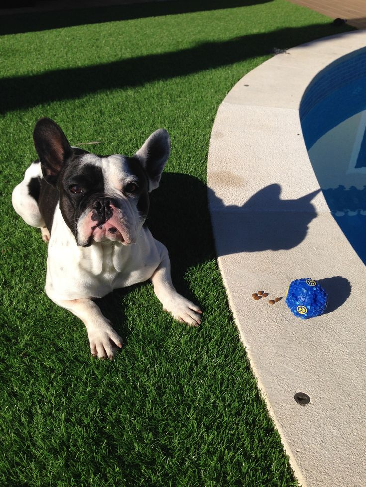 Testing new products. Whats the verdict? This treat dispensing toy did the trick. He loves it!