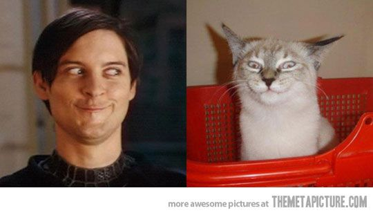 Separated at birth…cat cuter mr mcguire