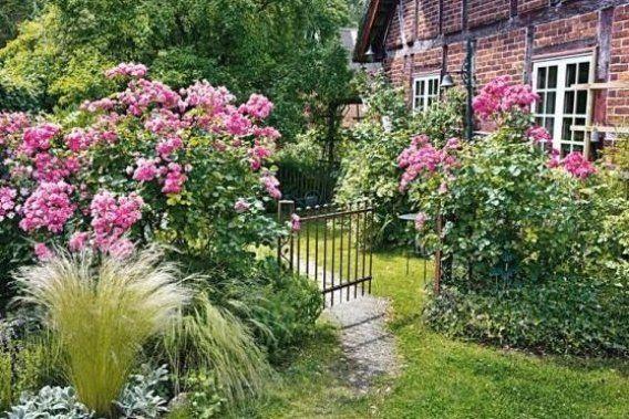 Buschige Rosen Im Bauerngarten Tipps F R Pflanzen Garten Sichtschutzgarten Inagarten Japanischergarten In 2020 Cottage Garden Flower Garden Garden Tags
