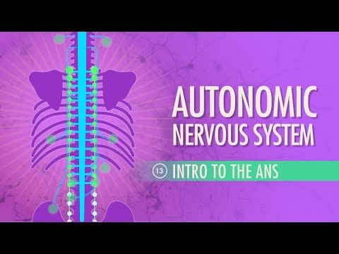 Autonomic Nervous System: Crash Course A&P #13 - YouTube