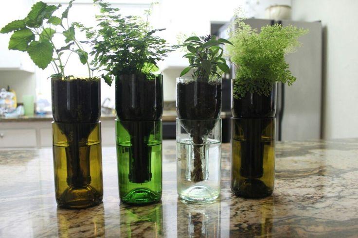 Selbstbewässerungstöpfe aus Flaschen
