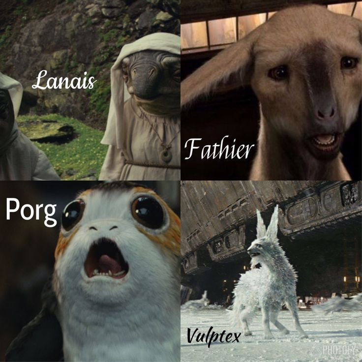 Fathiers and vulptex are the best! Porgs are pretty cute too :)