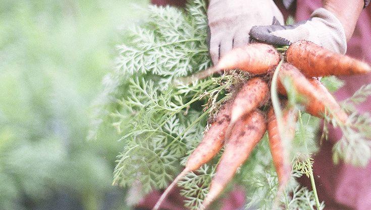 Have a vegetafull life! こんにちは、青果ミコト屋です! ボクたちは自然栽培を中心とした、おいしい野菜を定期宅配する小さな八百屋です。 日本全国津々浦々を旅してまわり、本当においしい旬のお野菜を日 …