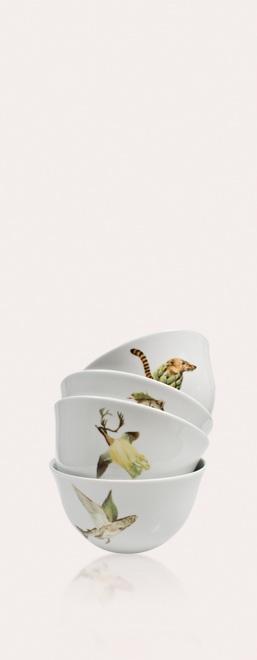 Kit de bowls de porcelana 'Rare Species' del Studio Laura Straßer