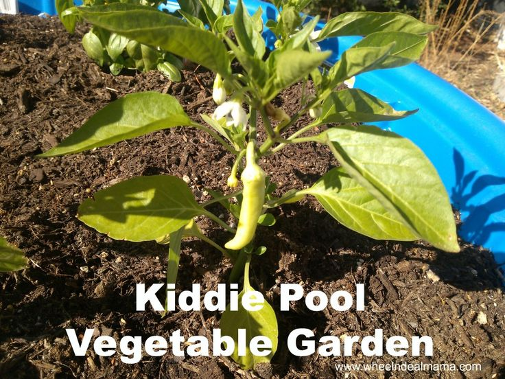 Do It Yourself Kid Pool Ve able Garden Hot Peppers Tomatoes Zucchini More