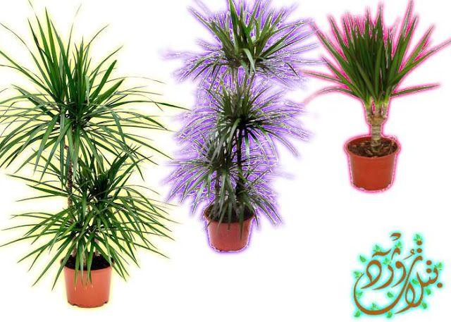 Pin By Qahtanadnaeef On نباتات منزلية Plants Planter Pots Planters