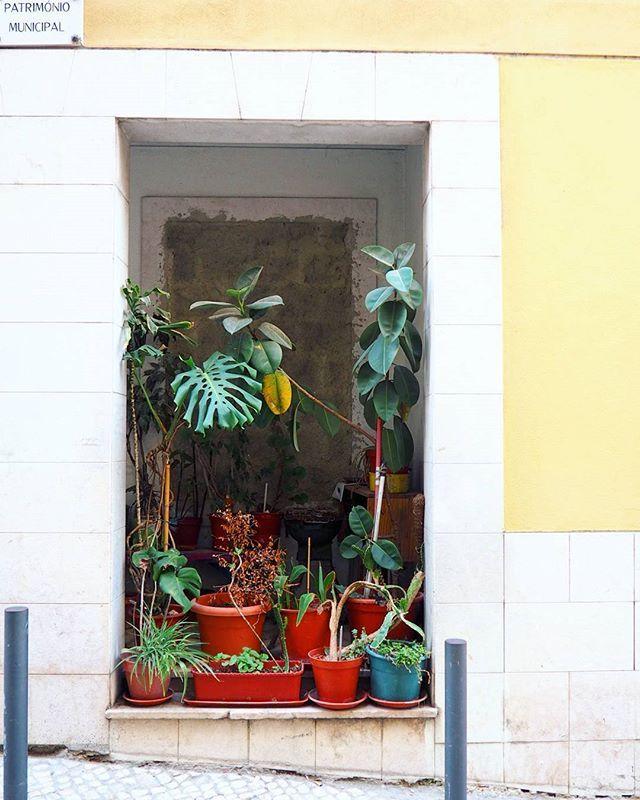 Dans le moindre recoin, on installe des plantes, sur le moindre crochet, le plus petit bout de fenêtre, on suspend une #plante à #Lisbonne !   #LGSàLisbonne #lisboalovers #UrbanJungle #lisboa #green #lisboaalive #gardening #mouraria