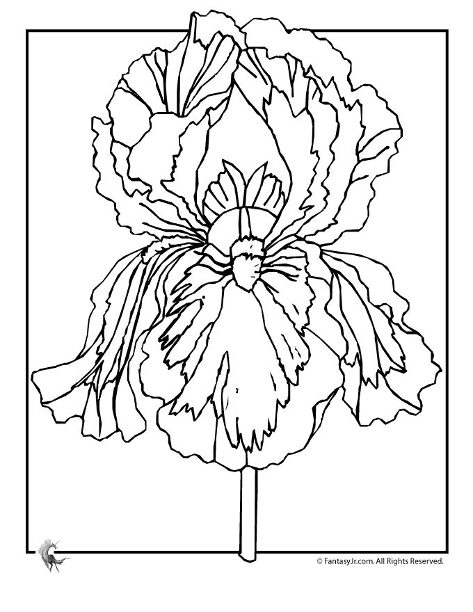 71 best images about coloring pages on pinterest for Iris flower coloring page