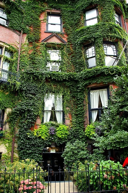 ...in Boston, MA: Building, Window, Vines, Ivy Covers, Boston Massachusetts, Beautiful, Ivy Houses, Gardens, Places