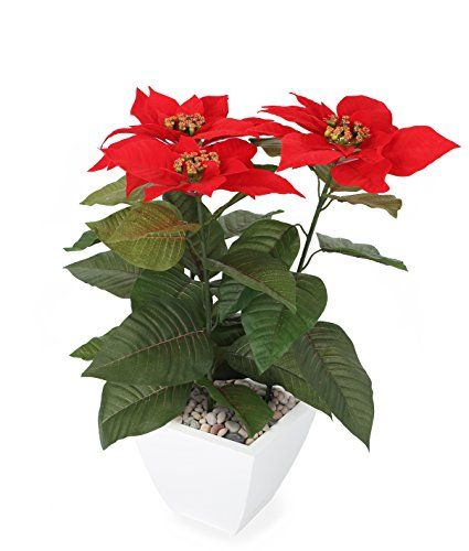 awesome  Highly realistic vibrant flowers and foliage Made using the finest materials and the most advanced manufacturing techniques to ensure botanical accuracy UV Resistant   https://www.silkyflowerstore.com/product/closer-to-nature-artificial-1ft-5-red-poinsettia-plant-artificial-silk-plant-and-tree-range/
