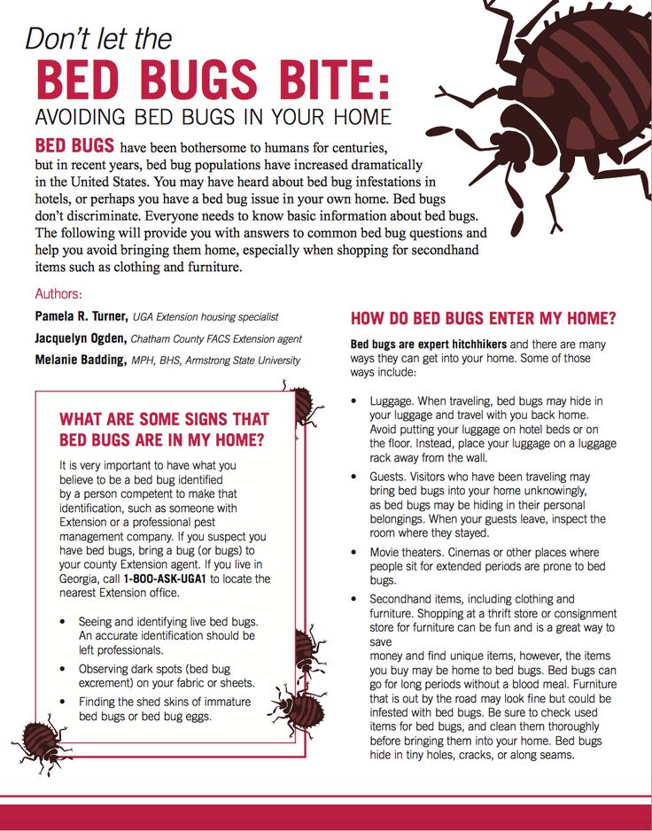Bed Bugs And Thrift Shops