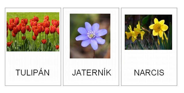 Jarní květiny - kartičky – (Mujblog.info v3.1)