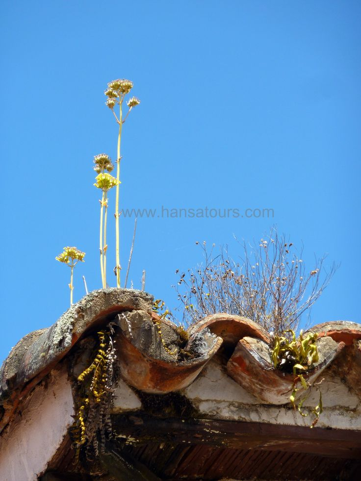 Small flowers growing up on the roof