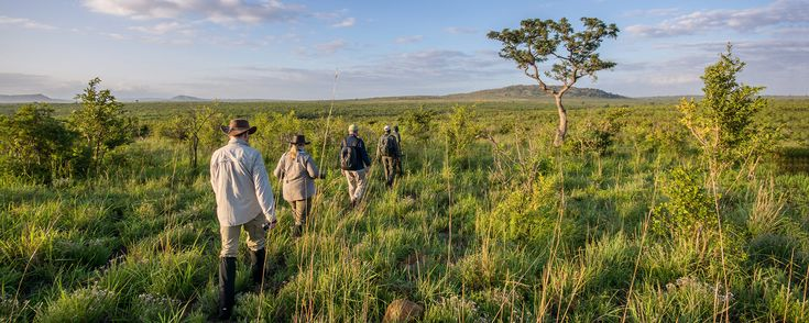 A walking trail in the Kruger National Park is by far the best way to experience the bush: we tested these amazing walks for you to try.