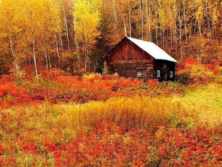 Cabane, in Mauricie, Canada by *sido*
